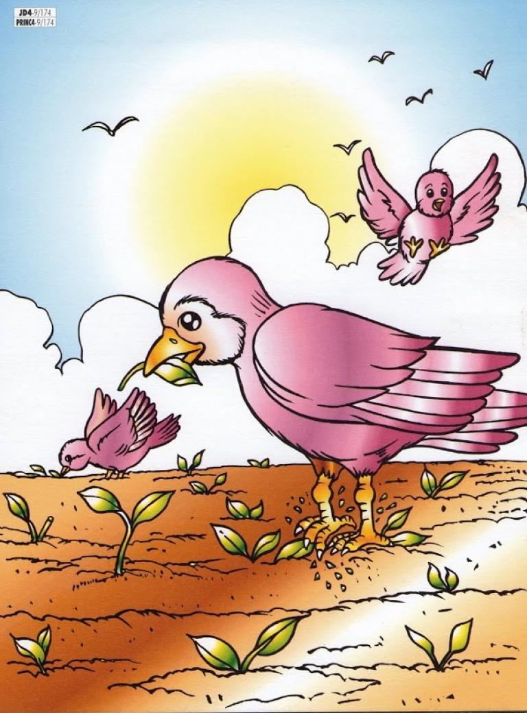 zaaier vogels